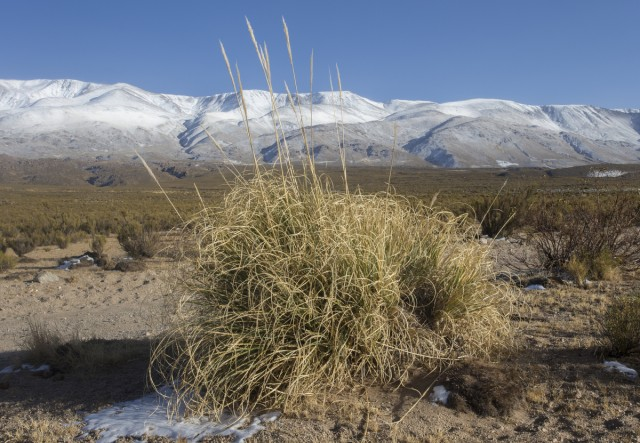 Puna landscape with snowy Andes, Laguna Blanca National Park, Catamarca.