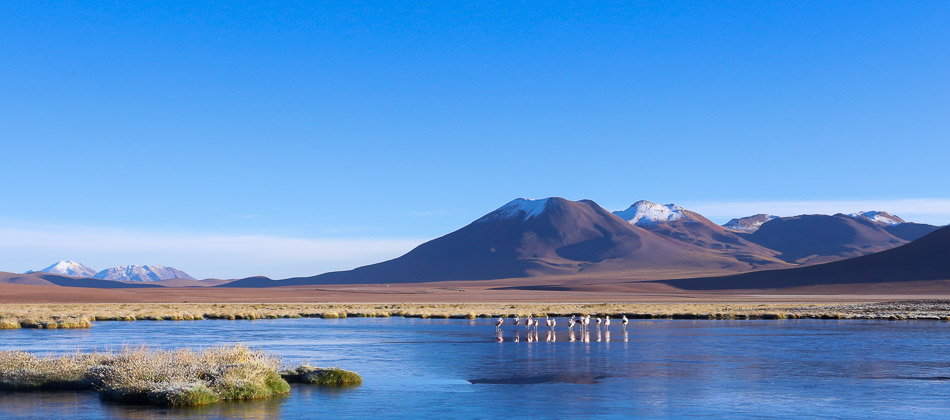 A freezing morning with Andean Flamingoes on the Chilean altiplano.