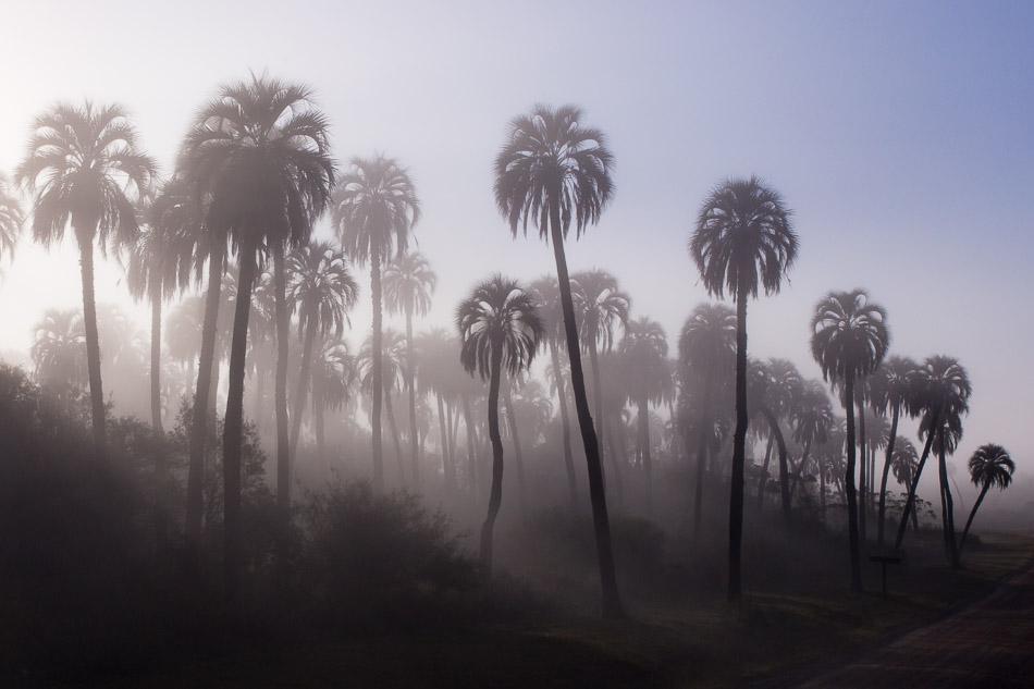 Yatay Palms