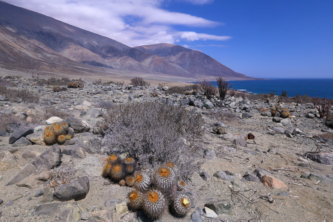Atacama coastal desert stretching down to the sea near Paposo, Chile.