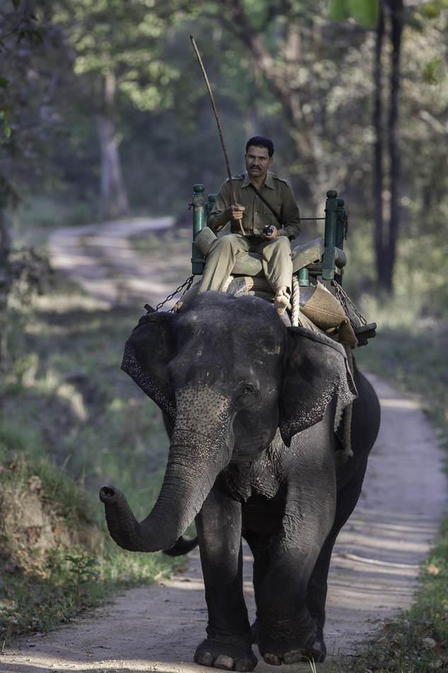 Khana forest guard.