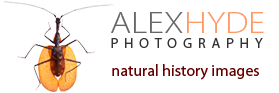 Alex Hyde wildlife photography