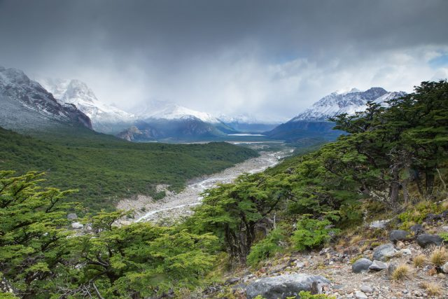 Sub-polar Forests