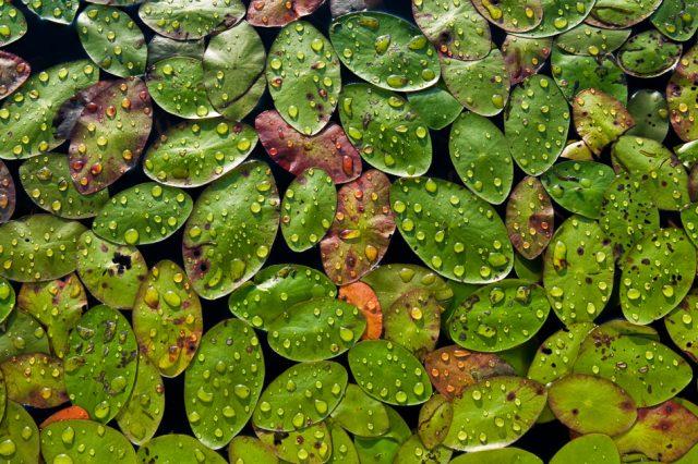 Textures of raindrops