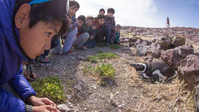 Children and Magellanic Penguin